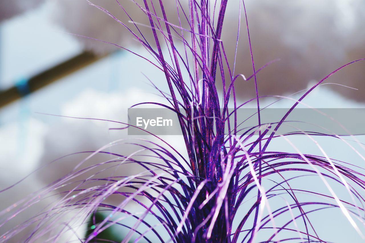 Close-up of purple pom-pom