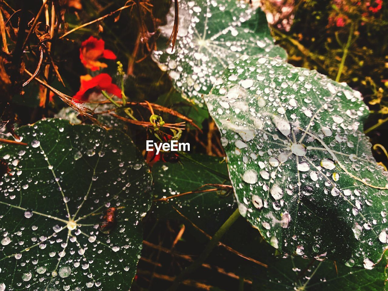 leaf, nature, close-up, drop, water, growth, beauty in nature, green color, day, fragility, spider web, focus on foreground, no people, outdoors, plant, web, cold temperature, freshness, branch