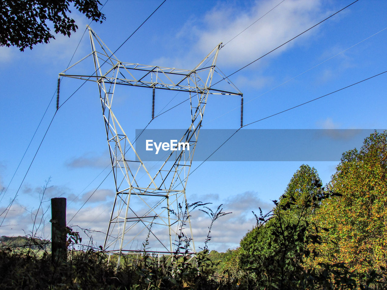 cable, tree, sky, day, low angle view, no people, cloud - sky, outdoors, electricity, electricity pylon, blue, fuel and power generation, growth, plant, nature