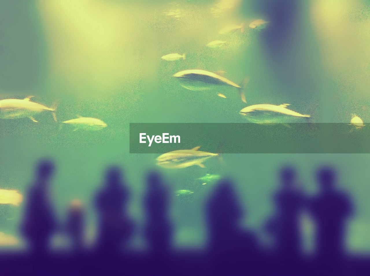 water, swimming, sea life, fish, aquarium, animal themes, underwater, animals in the wild, silhouette, nature, large group of animals, animals in captivity, indoors, beauty in nature, backgrounds, no people, close-up, day, undersea