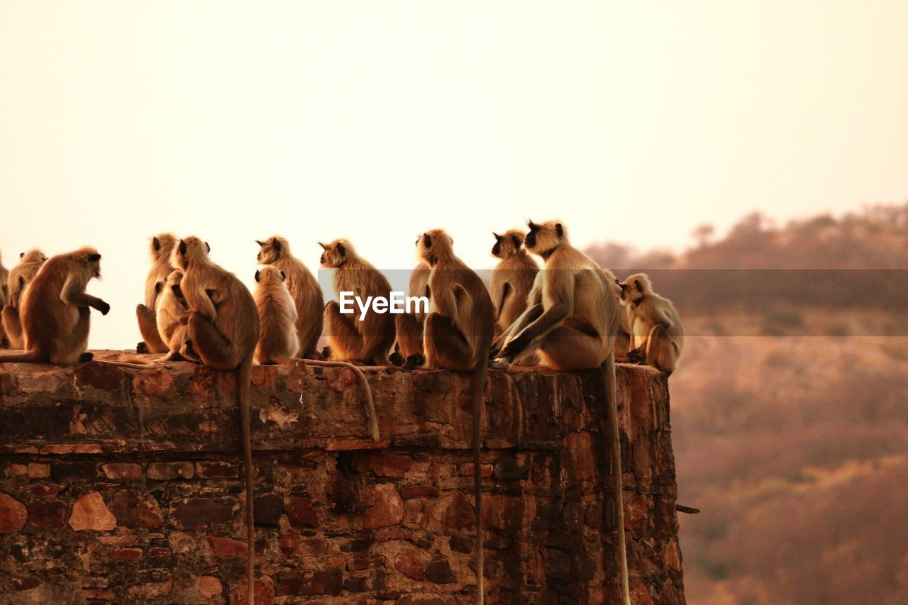 Close-Up Of Monkeys Sitting On Stone Wall