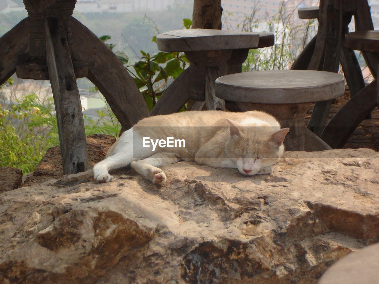 Cat sleeping on rock