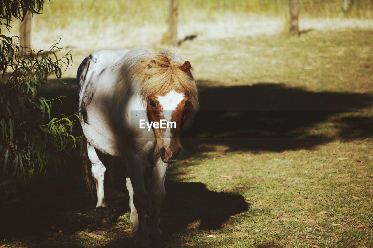 Portrait of pony on grass