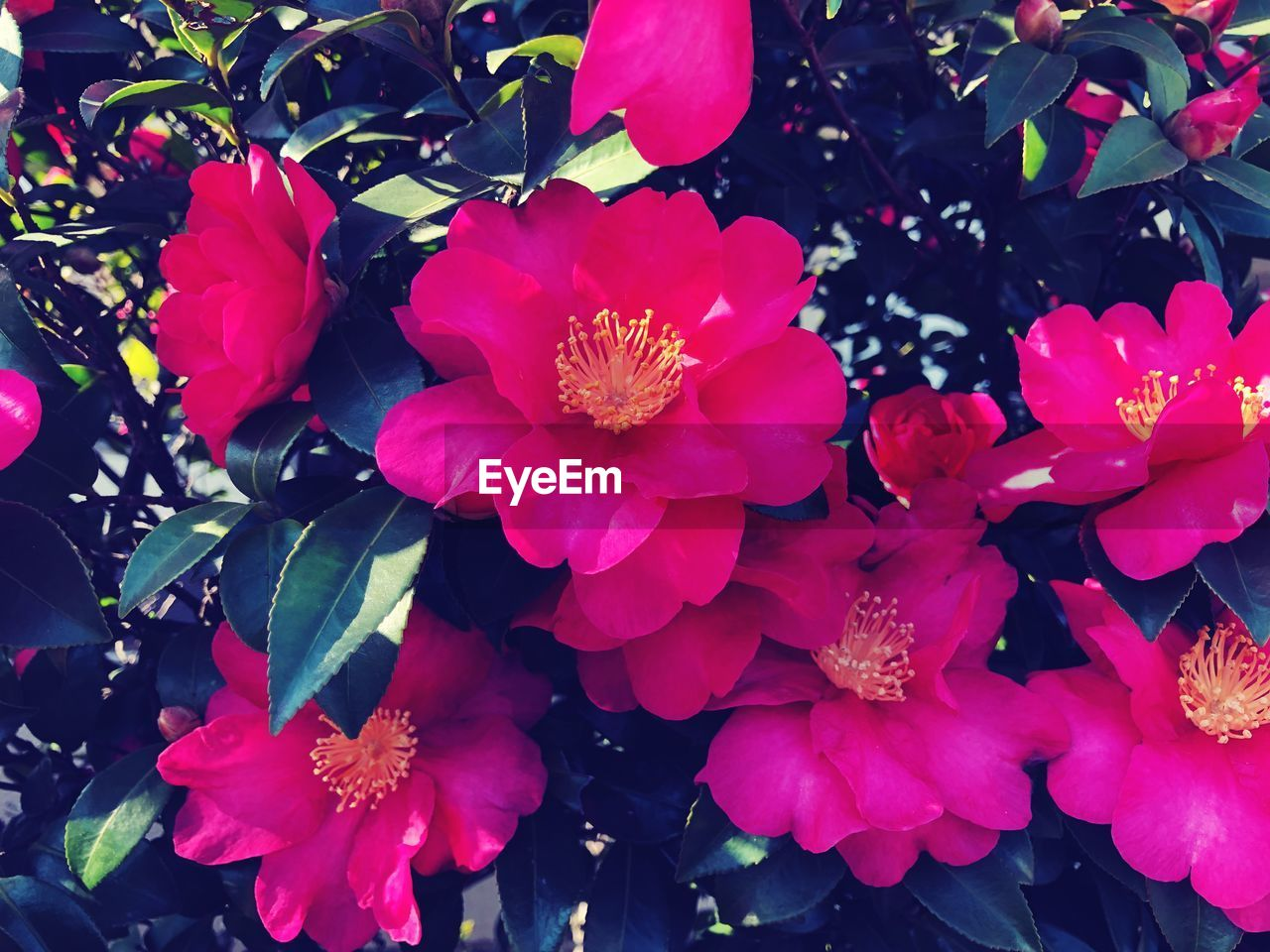 flower, nature, beauty in nature, growth, petal, no people, plant, flower head, blooming, fragility, freshness, outdoors, close-up, day