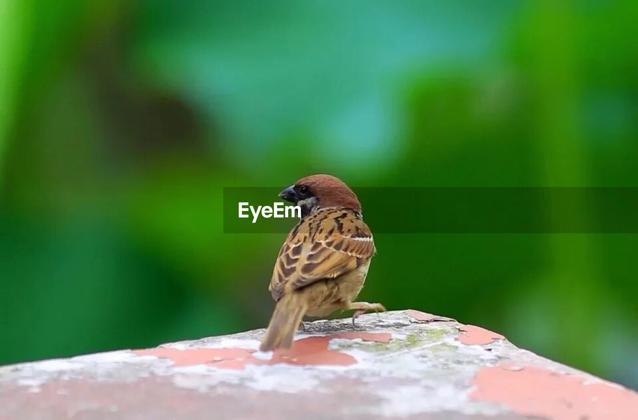 animals in the wild, animal themes, one animal, wildlife, focus on foreground, bird, perching, close-up, full length, nature, side view, selective focus, outdoors, day, beauty in nature, leaf, green color, no people, rock - object, zoology