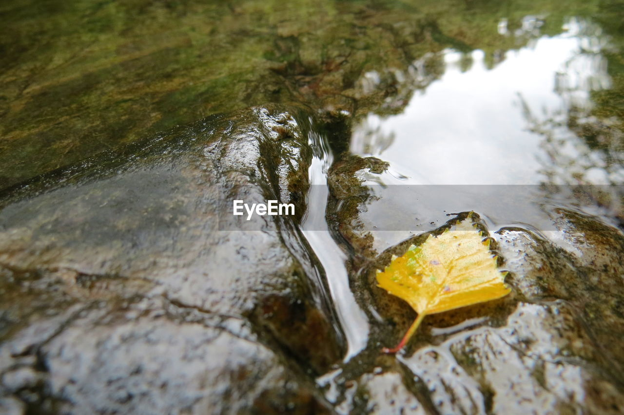 water, no people, nature, day, rock, high angle view, selective focus, rock - object, solid, close-up, outdoors, reflection, lake, wet, flowing water, waterfront, tranquility, tree, plant, shallow, purity