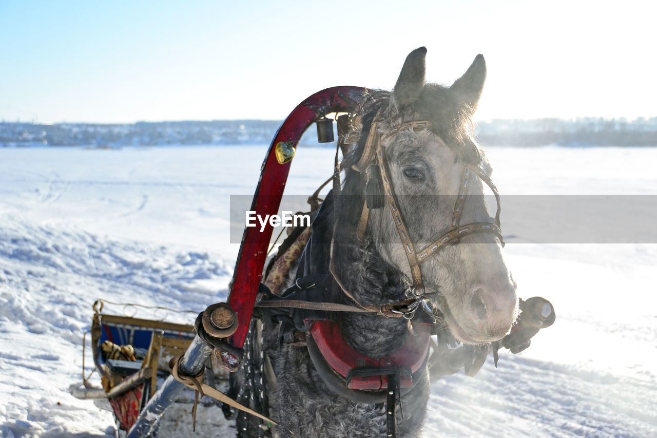 Portrait Of Horse Drawn Cart On Snow Covered Field