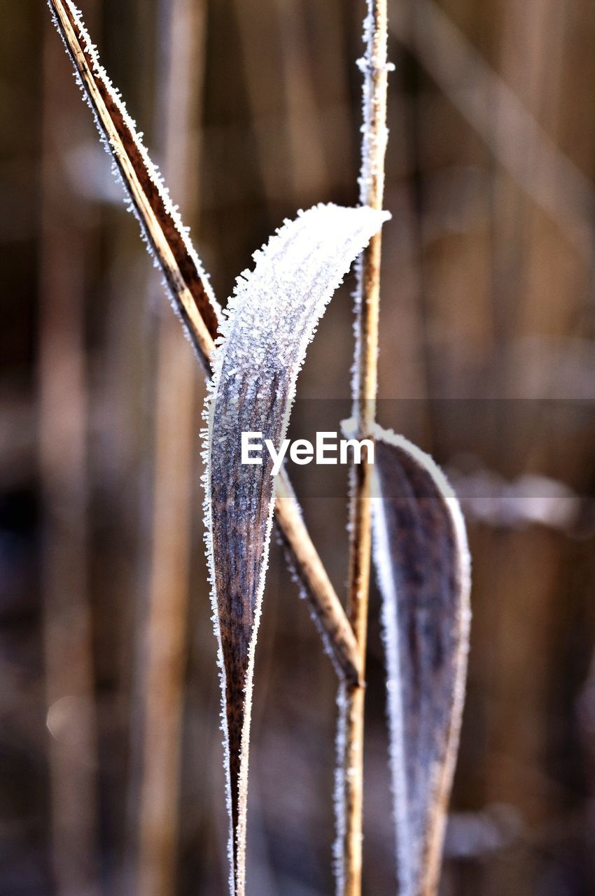 winter, close-up, focus on foreground, cold temperature, nature, no people, ice, snow, frozen, day, beauty in nature, outdoors, hanging, freshness