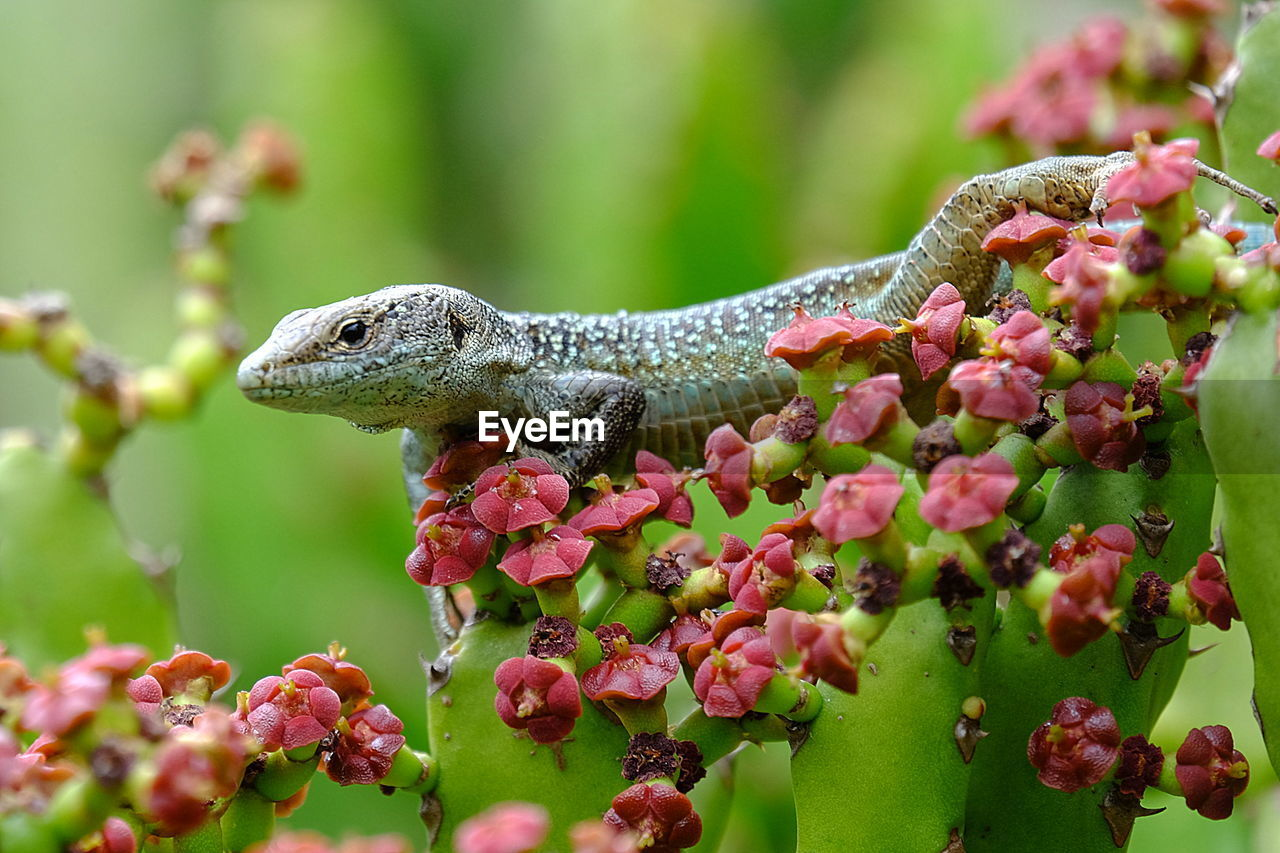 Close-up of lizard on plants