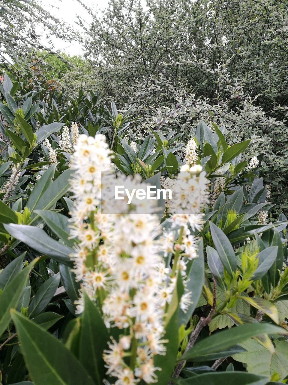 growth, flower, nature, plant, no people, outdoors, leaf, day, field, fragility, green color, freshness, beauty in nature, close-up, tree, flower head