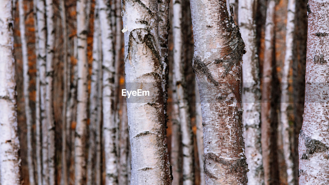 no people, close-up, day, tree trunk, full frame, outdoors, trunk, tree, nature, backgrounds, plant, selective focus, beauty in nature, business finance and industry, forest, food and drink, wood - material, focus on foreground, large group of objects, food