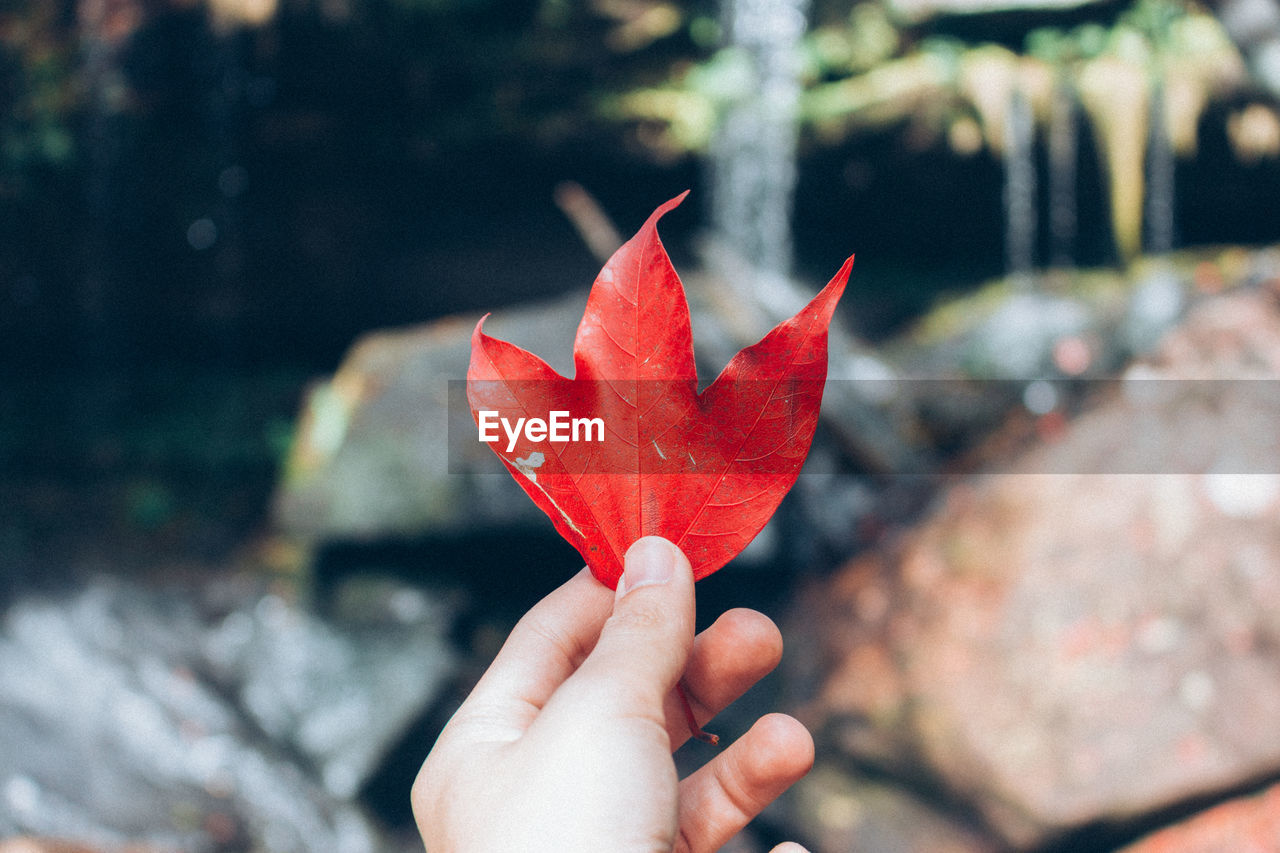 Close-Up Of Hand Holding Maple Leaf Against Waterfall During Autumn