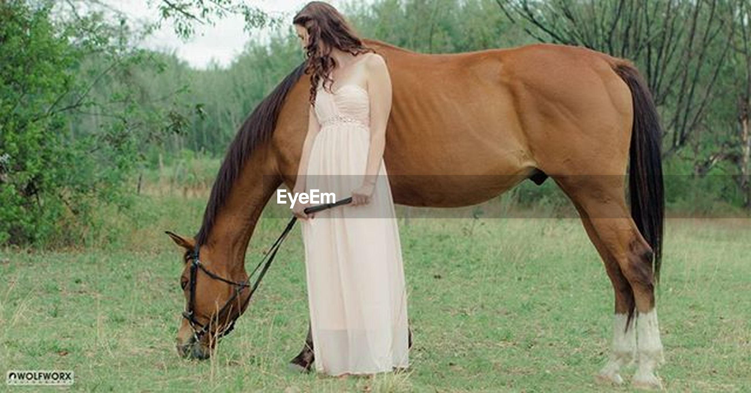 horse, animal themes, mammal, herbivorous, field, livestock, grass, standing, domestic animals, working animal, two animals, brown, one animal, side view, grassy, grazing, full length, nature, day, tree