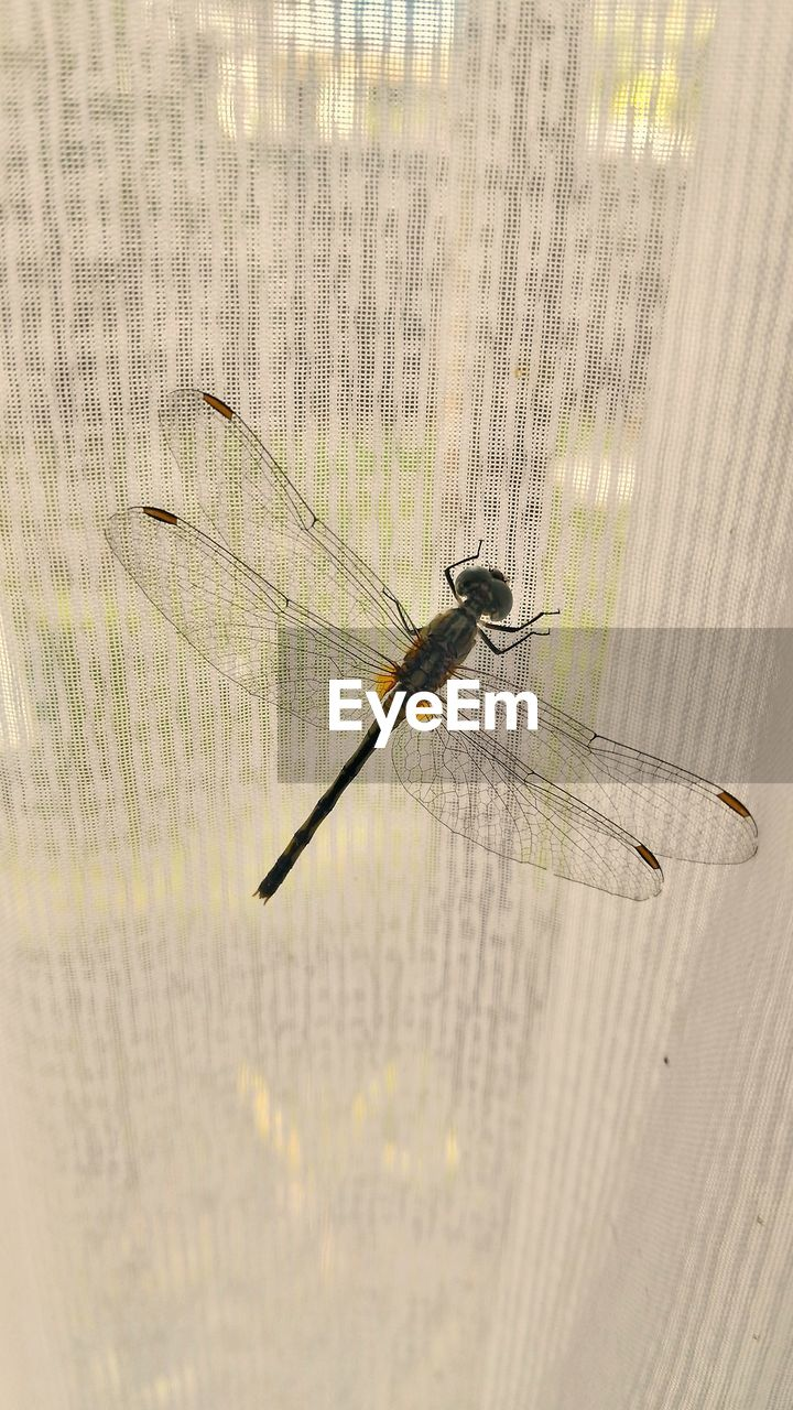 insect, animal themes, animals in the wild, one animal, day, close-up, damselfly, animal wildlife, no people, nature, outdoors
