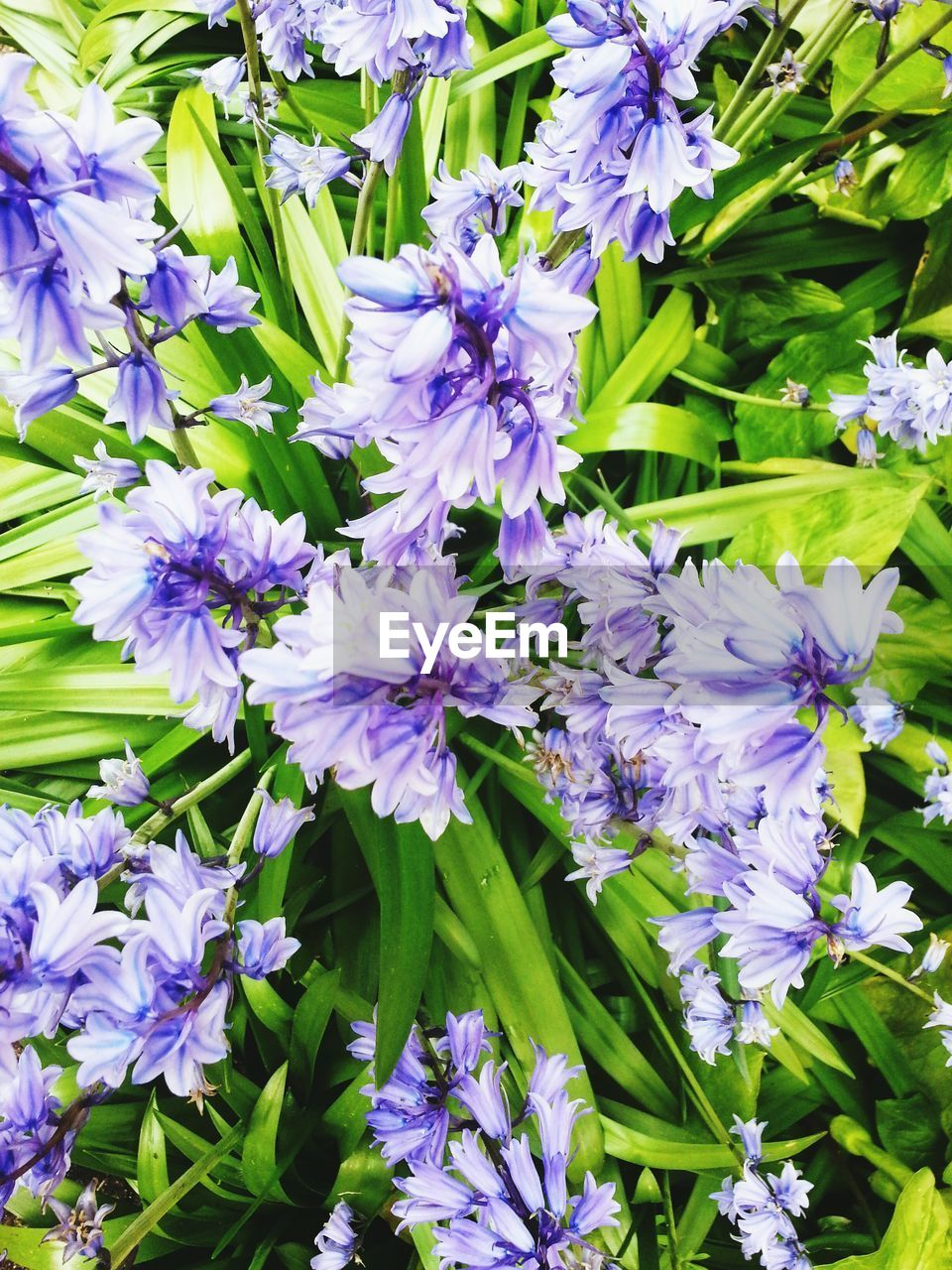flower, purple, nature, growth, fragility, beauty in nature, petal, delicate, no people, plant, freshness, outdoors, day, flower head, close-up