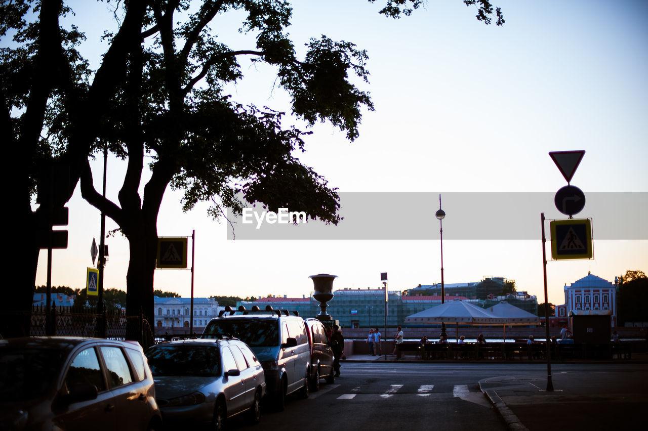 CARS ON TREE AGAINST SKY