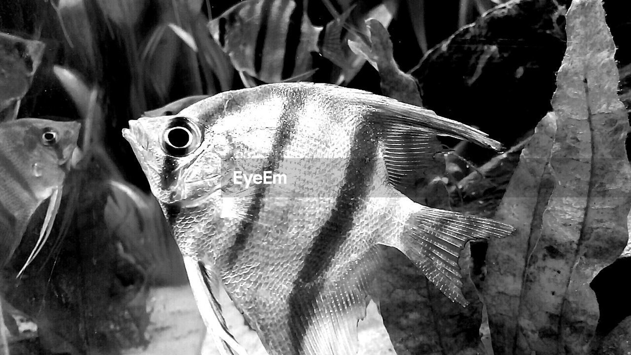 fish, no people, animal themes, close-up, one animal, animals in the wild, day, animal wildlife, outdoors, nature