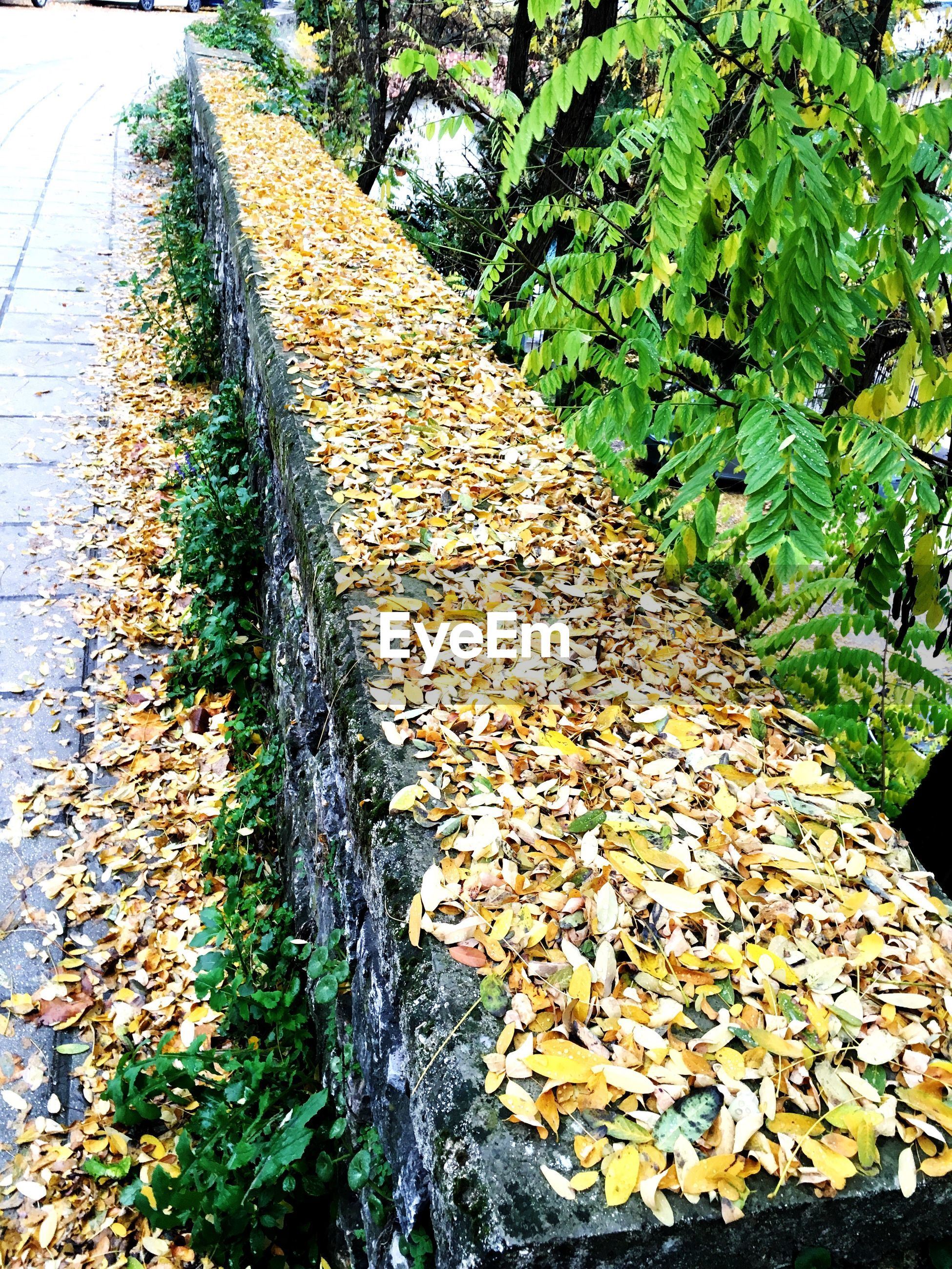 leaf, autumn, change, tree, nature, season, growth, tranquility, the way forward, leaves, fallen, beauty in nature, day, green color, plant, footpath, diminishing perspective, outdoors, tranquil scene, no people