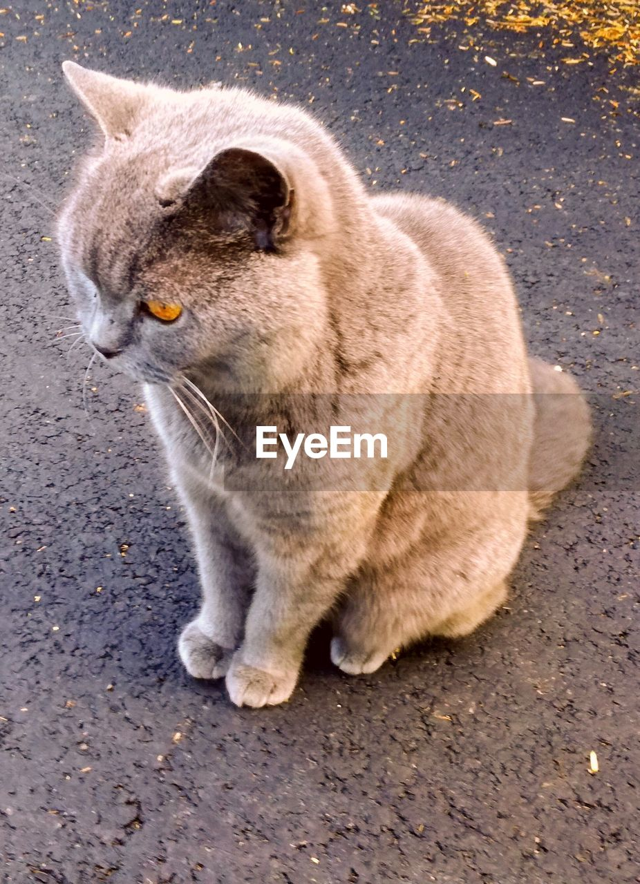 animal, animal themes, one animal, mammal, cat, feline, domestic cat, domestic animals, pets, domestic, vertebrate, no people, looking away, looking, day, sitting, side view, city, full length, whisker, tabby