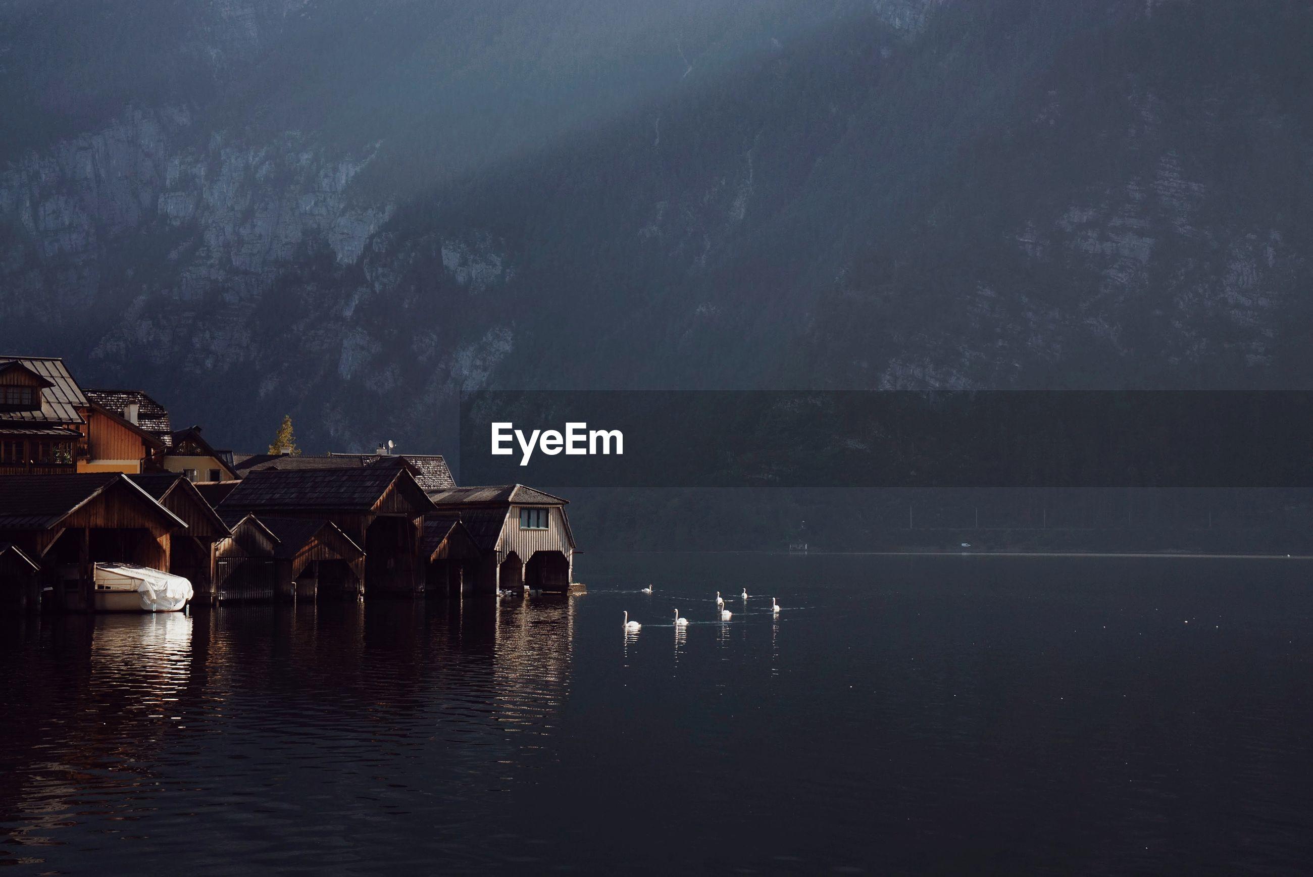 White swans on lake against dark mountain in austria