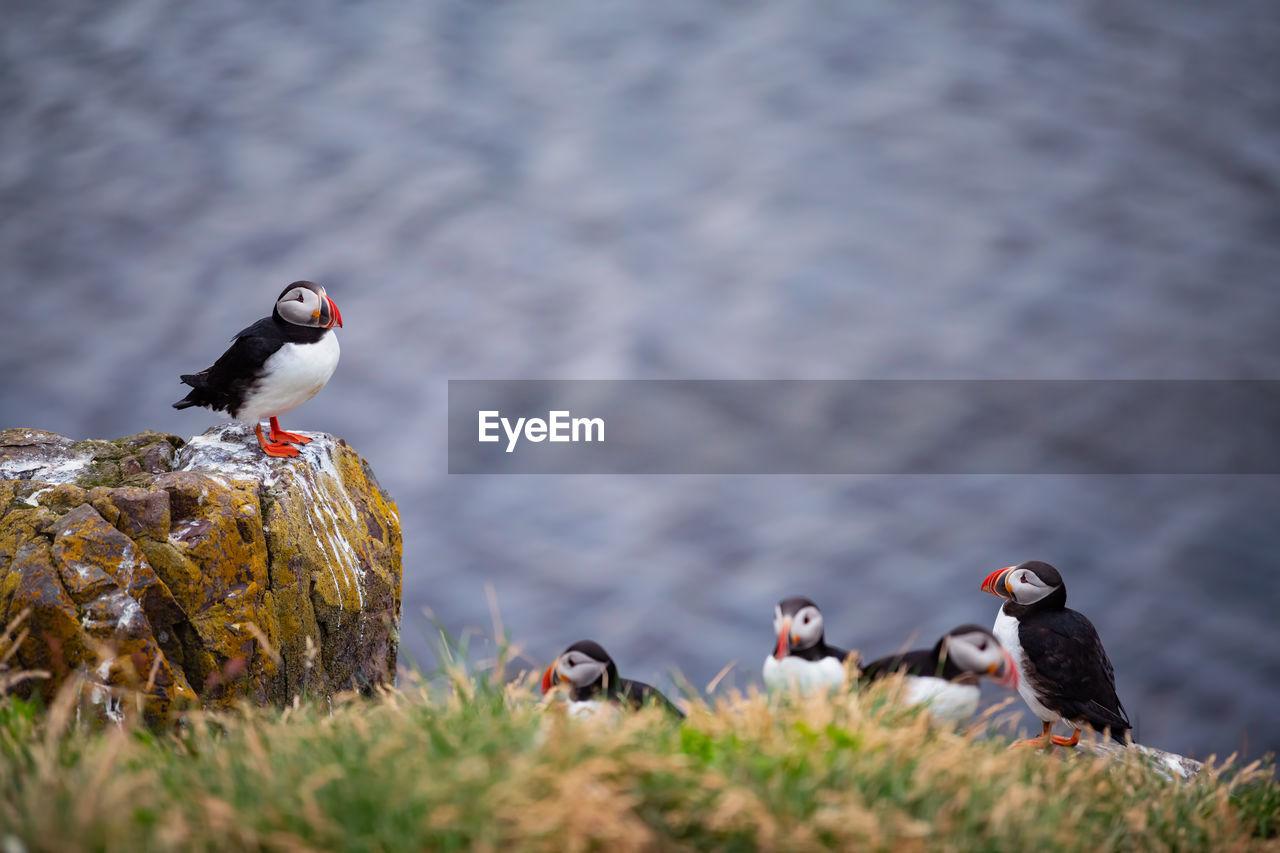 Birds Perching On Field Against Lake