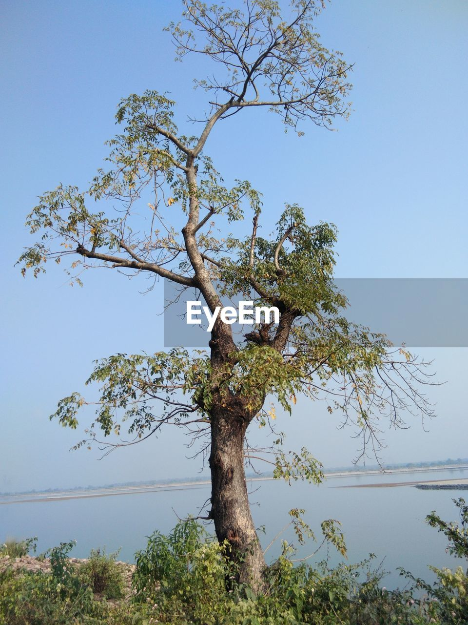 tree, nature, branch, growth, clear sky, day, tranquility, beauty in nature, tree trunk, outdoors, no people, scenics, low angle view, tranquil scene, sky, blue