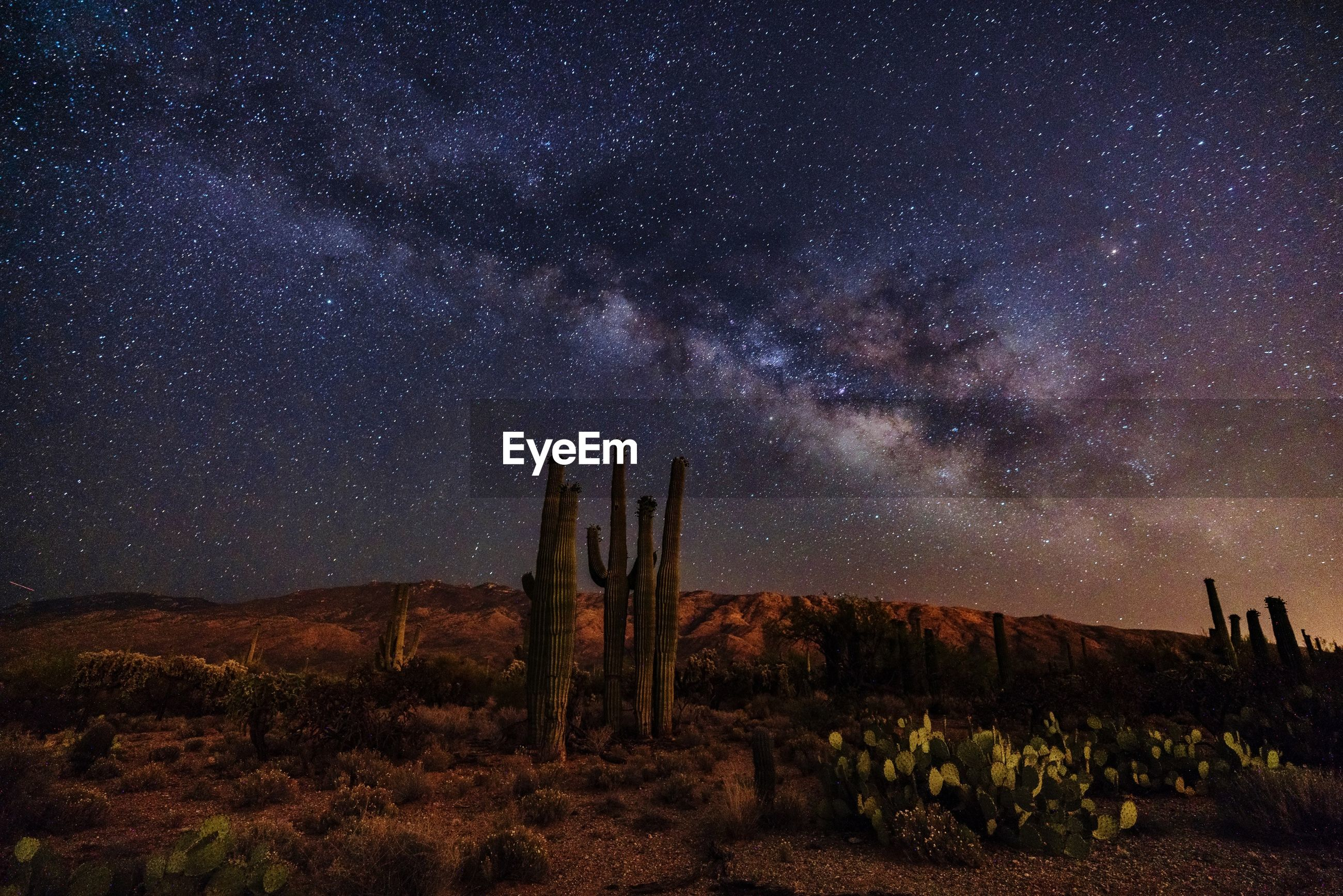 Cactus growing on field against star field sky at night