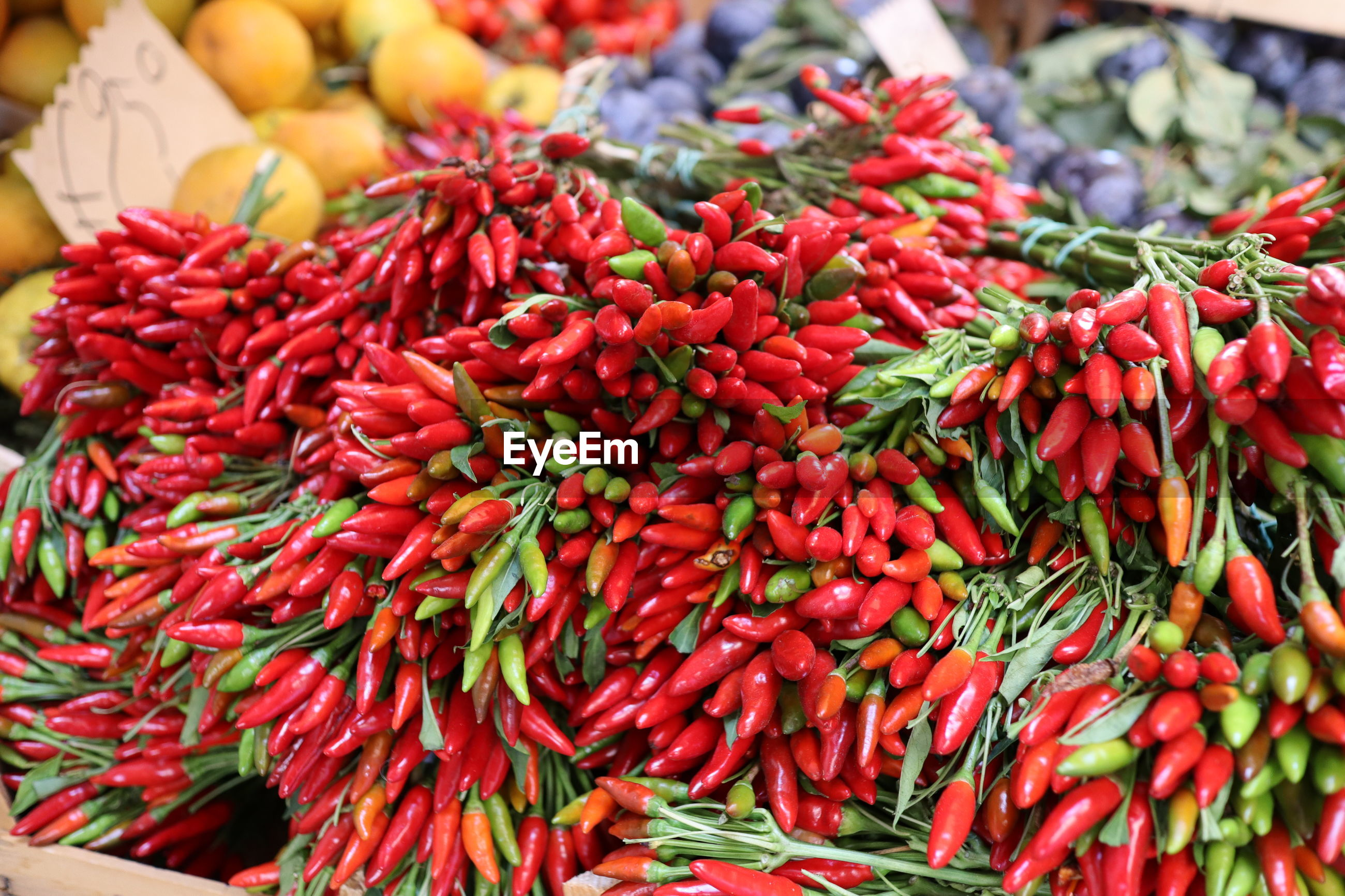 RED CHILI PEPPERS FOR SALE