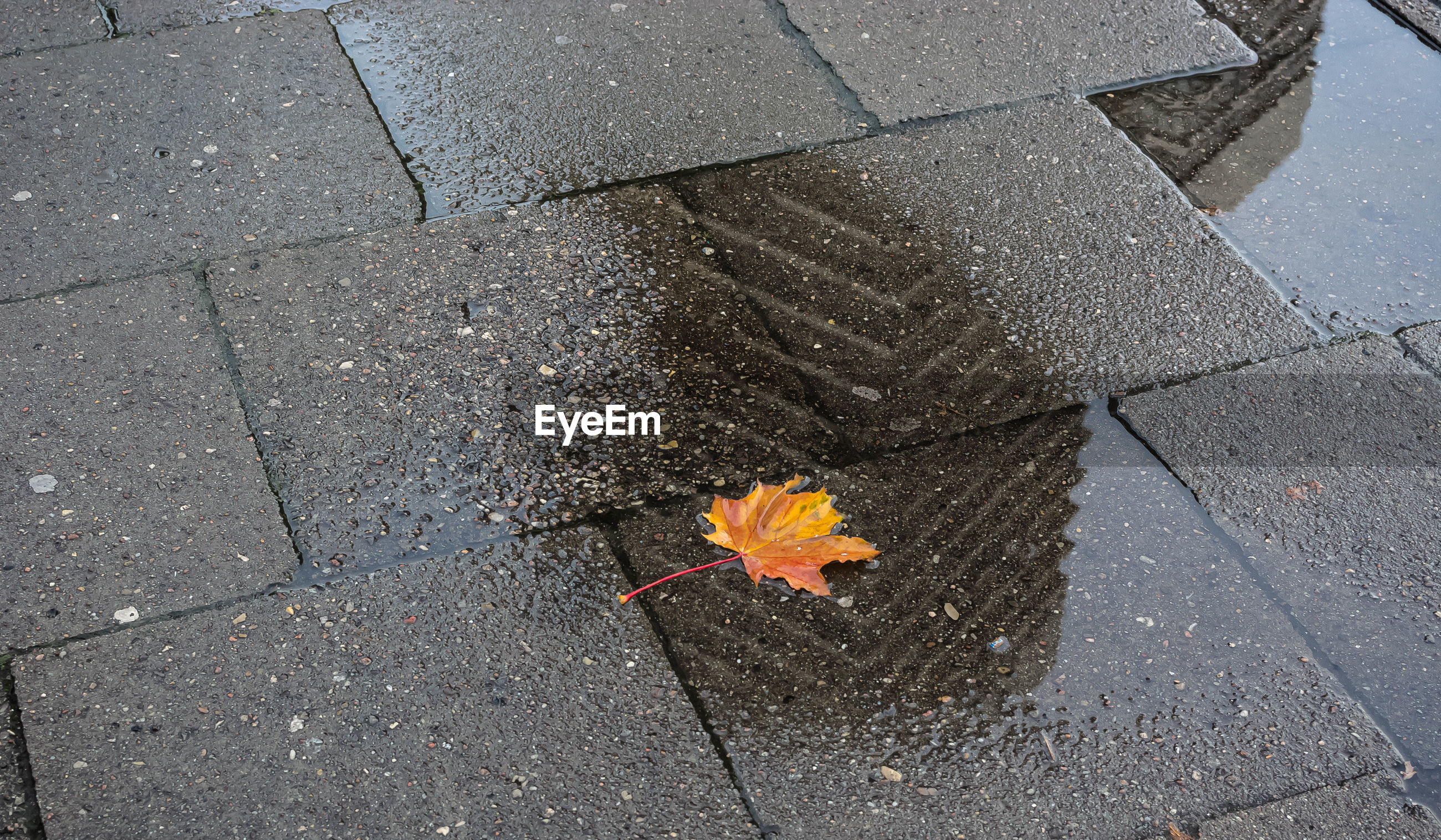 HIGH ANGLE VIEW OF YELLOW MAPLE LEAF ON STREET