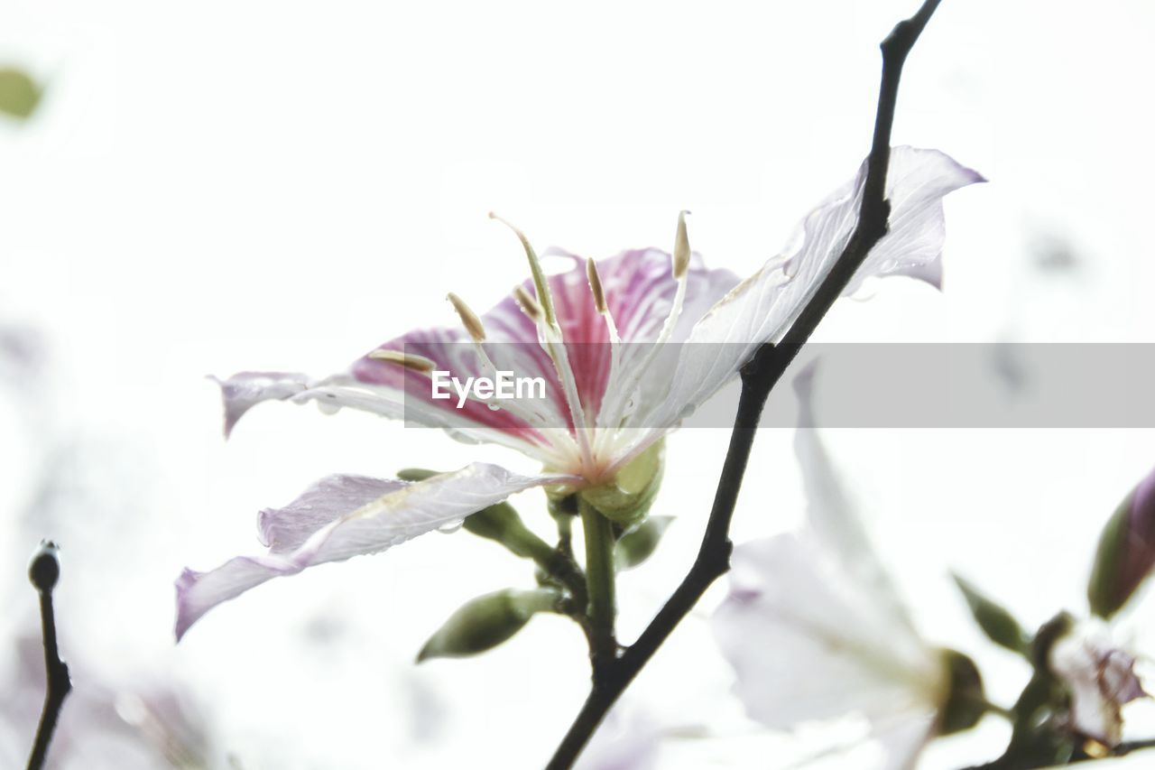 flower, fragility, petal, nature, growth, freshness, beauty in nature, flower head, close-up, no people, plant, outdoors, day, blooming