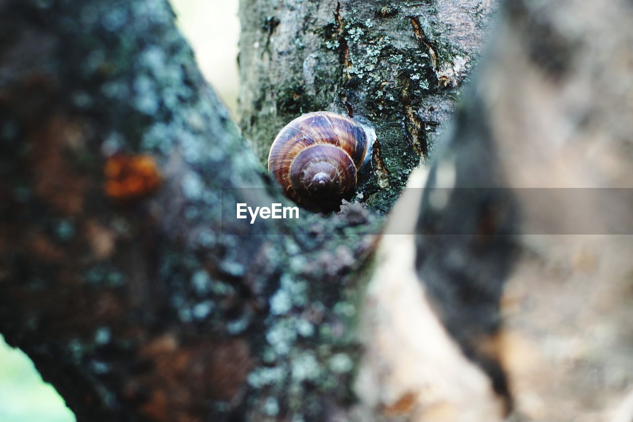animal wildlife, animal themes, animal, animals in the wild, shell, animal shell, mollusk, invertebrate, close-up, tree trunk, snail, day, trunk, one animal, selective focus, gastropod, no people, textured, rock - object, solid, outdoors
