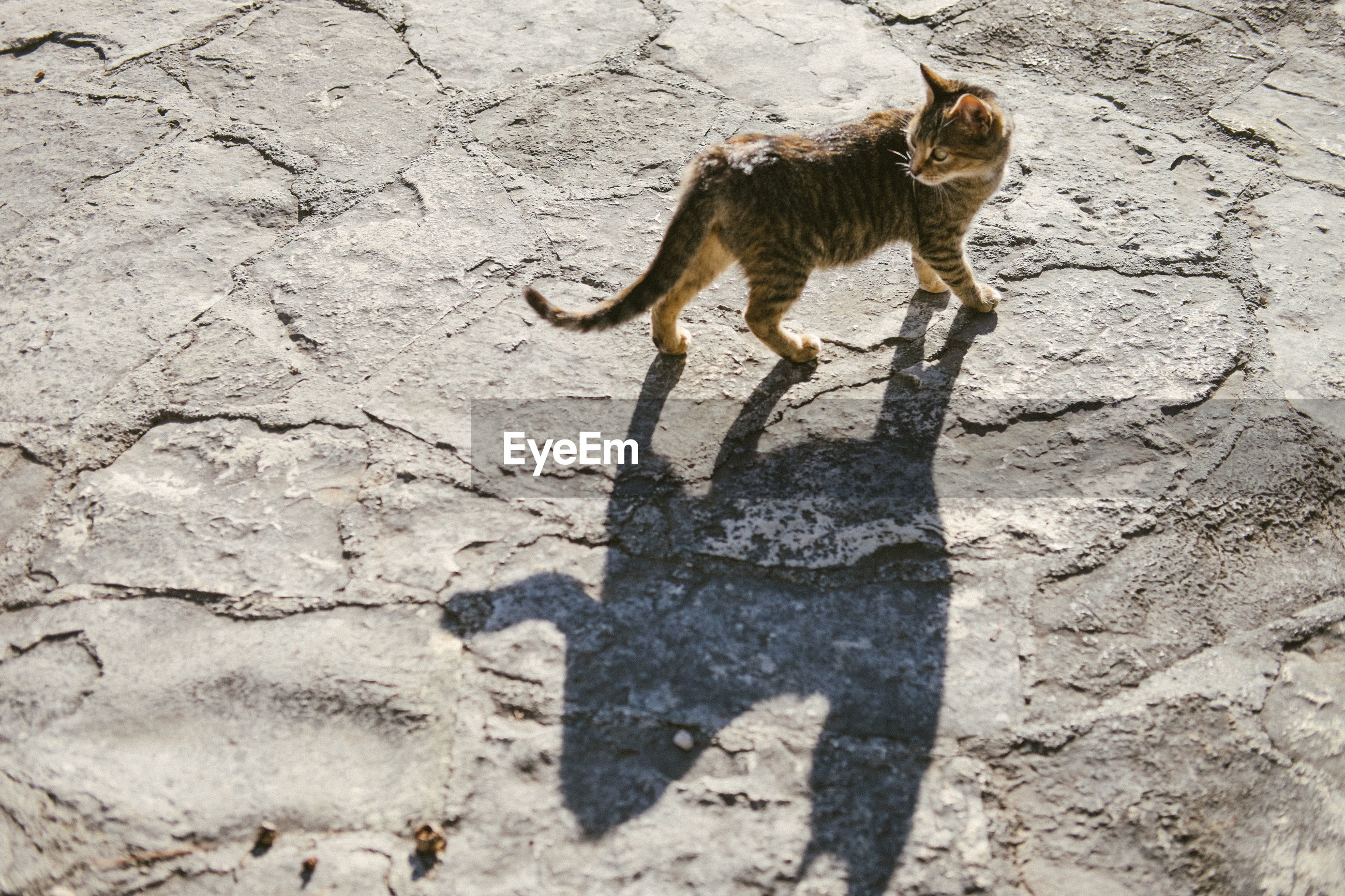 High angle view of cat walking on land