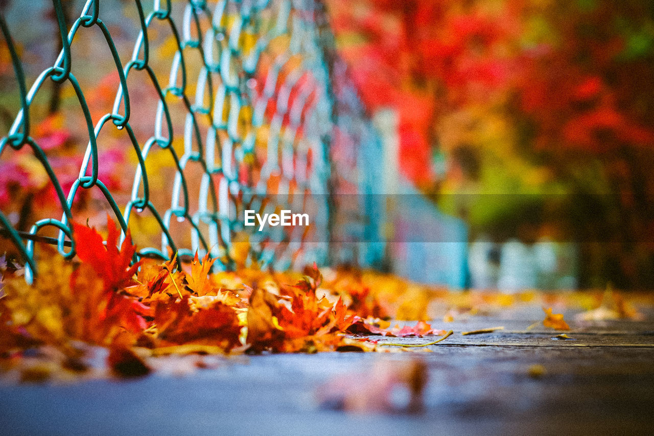 Dry Leaves By Fence