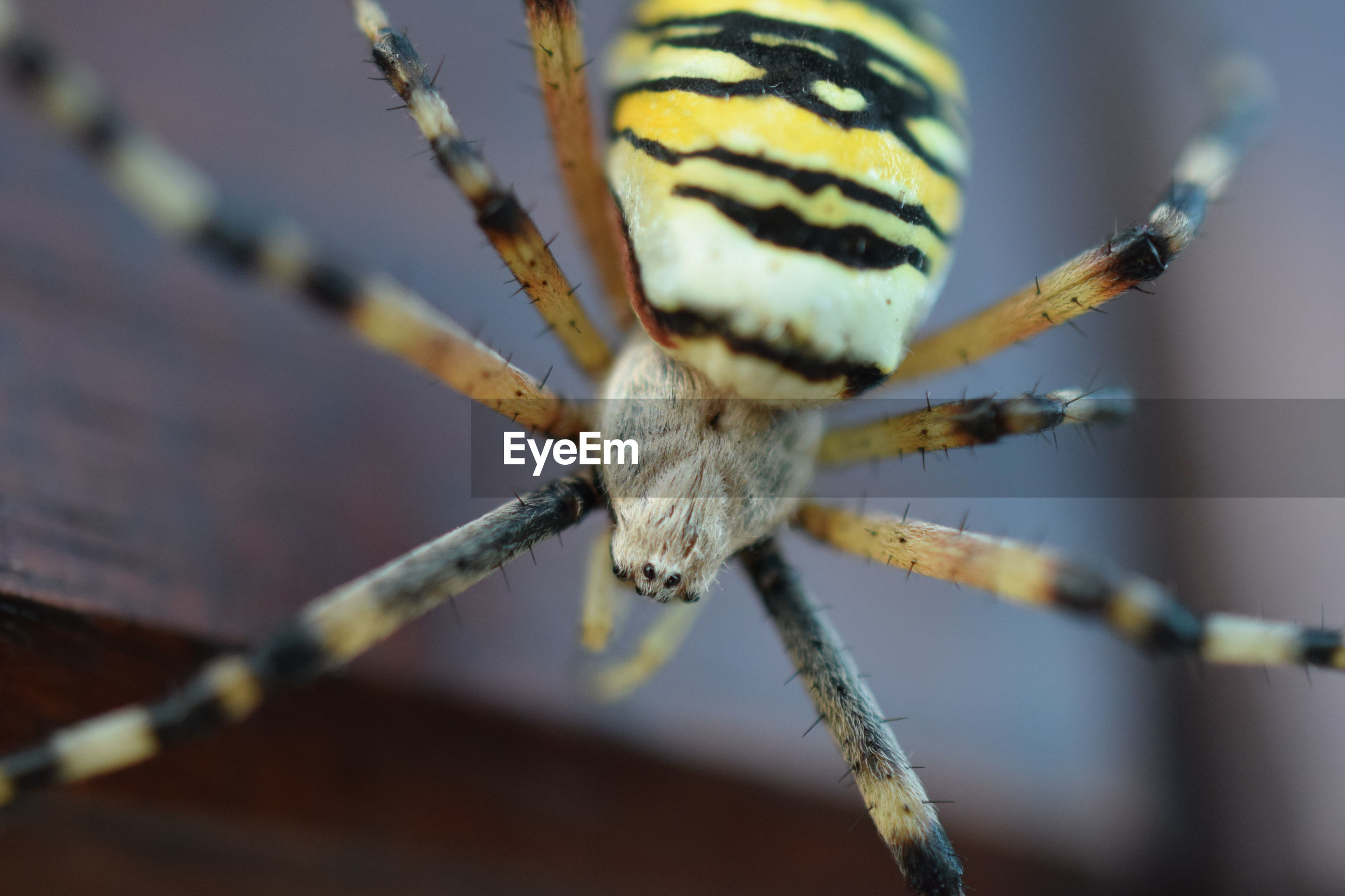 CLOSE-UP OF SPIDER OUTDOORS