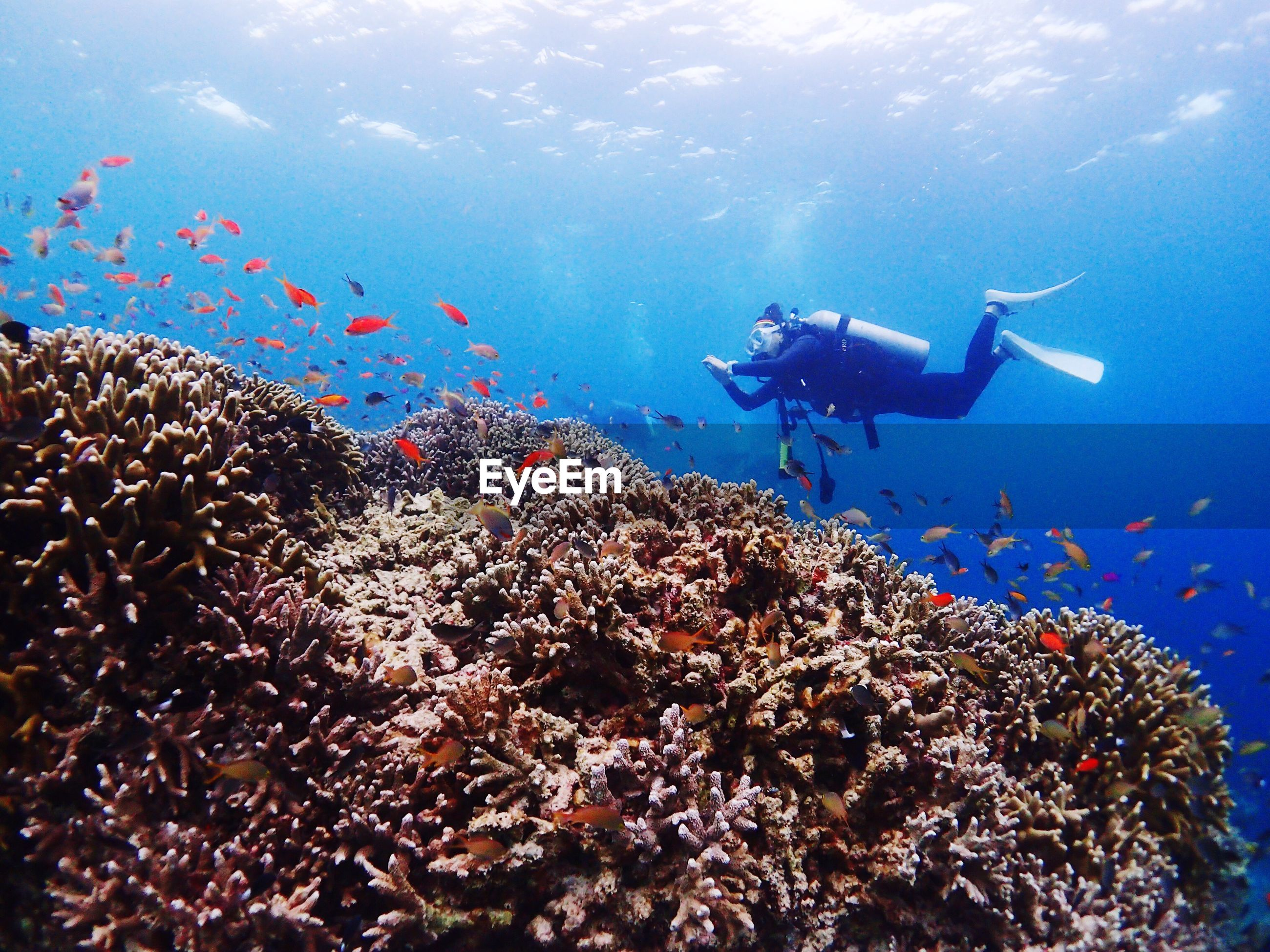 Low angle view of scuba diving swimming by fishes over corals in sea