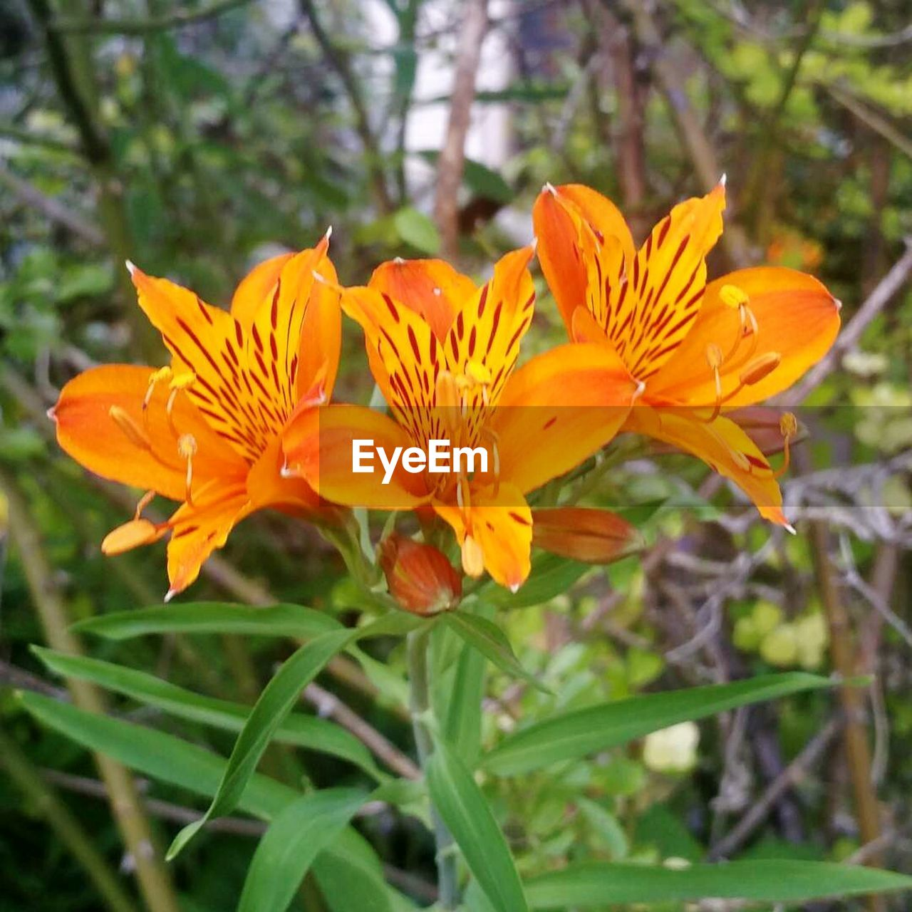 flower, petal, growth, beauty in nature, nature, flower head, fragility, plant, freshness, orange color, blooming, field, no people, day, outdoors, pollen, leaf, yellow, close-up, day lily