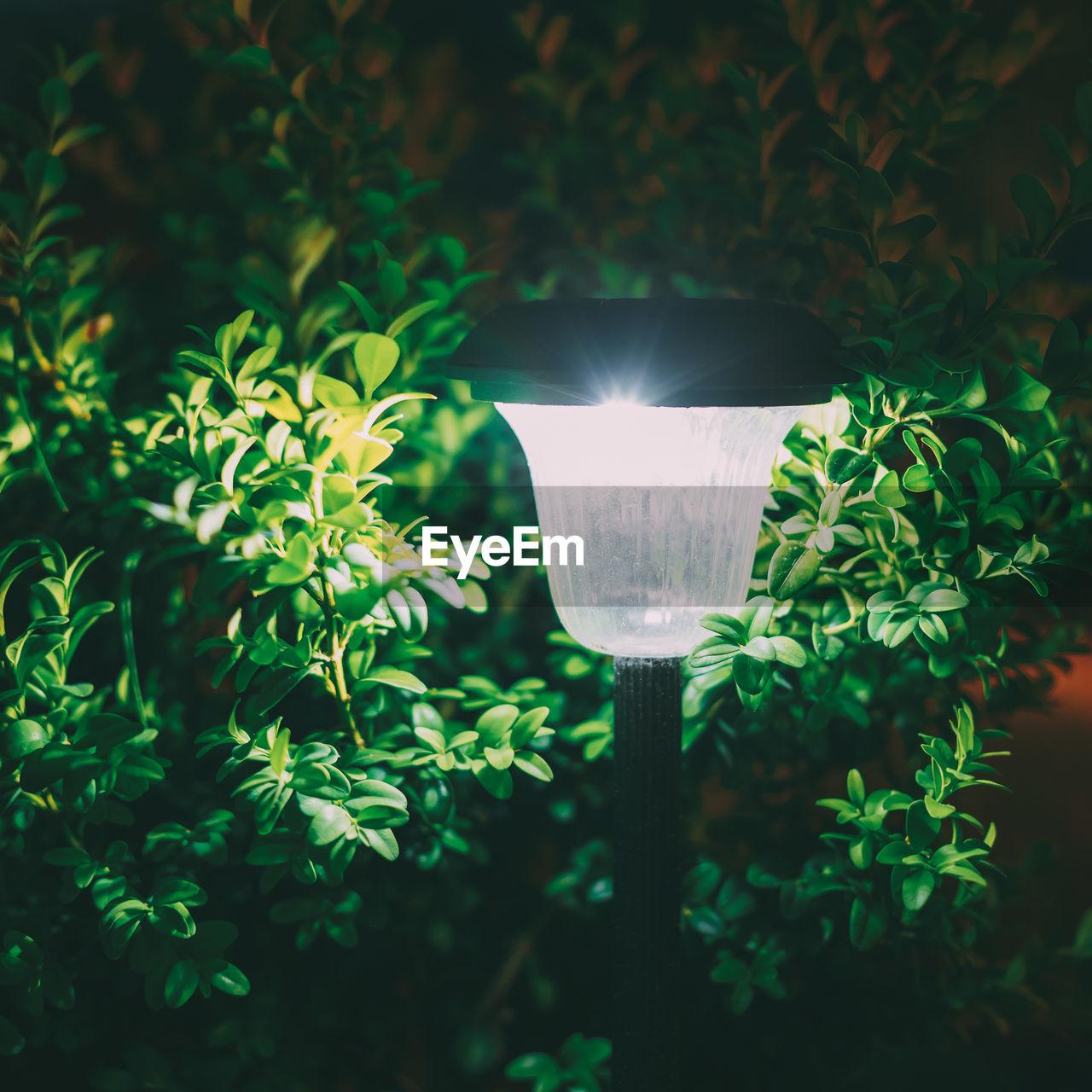 CLOSE-UP OF ILLUMINATED LIGHT BULB AGAINST TREES