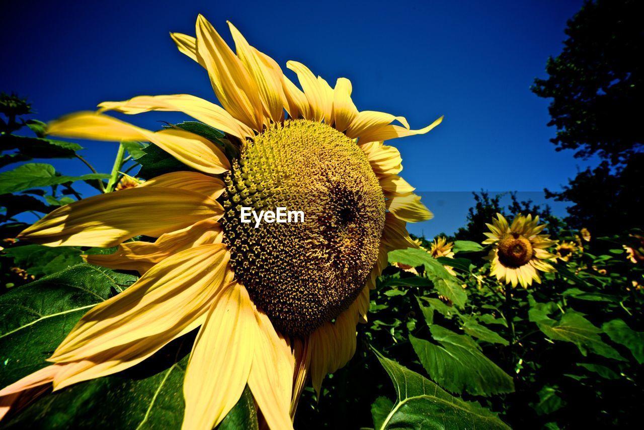 flower, yellow, petal, fragility, growth, nature, flower head, beauty in nature, sunflower, freshness, plant, no people, outdoors, blooming, day, close-up