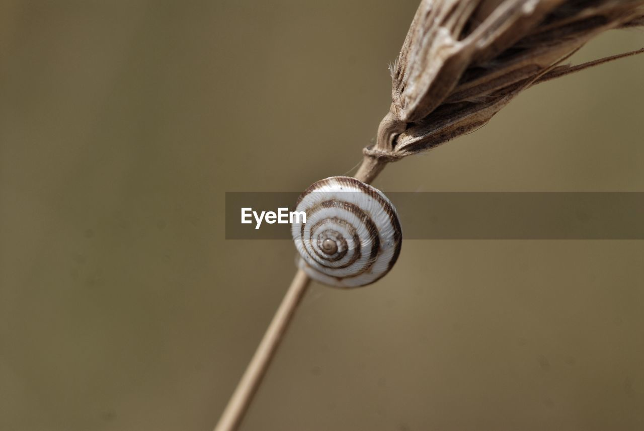 gastropod, snail, shell, mollusk, animal shell, animal wildlife, close-up, animal, one animal, animal themes, no people, invertebrate, animals in the wild, focus on foreground, spiral, animal antenna, nature, selective focus, plant, day