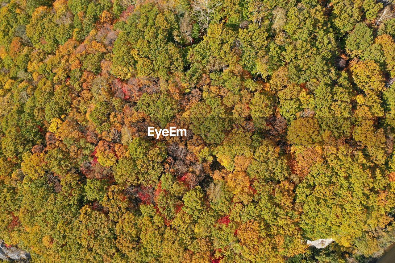 growth, plant, full frame, green color, tree, no people, beauty in nature, backgrounds, day, nature, land, outdoors, abundance, tranquility, high angle view, autumn, scenics - nature, close-up, freshness, moss, lichen