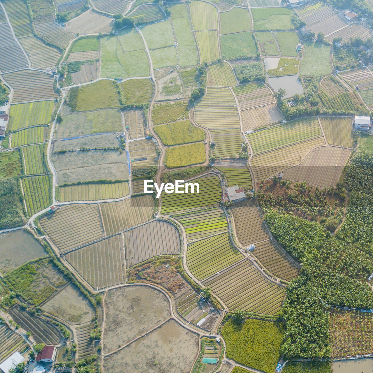 agriculture, landscape, environment, rural scene, aerial view, patchwork landscape, farm, scenics - nature, high angle view, beauty in nature, field, tranquil scene, day, tranquility, growth, plant, green color, land, no people, nature, outdoors, plantation