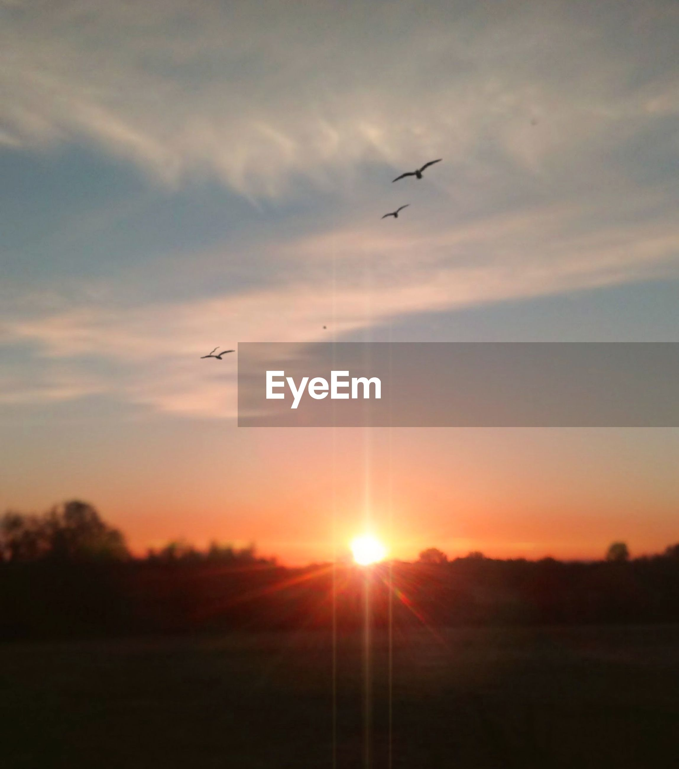sunset, sky, beauty in nature, cloud - sky, sun, flying, scenics - nature, bird, animal, silhouette, tranquil scene, animal themes, orange color, tranquility, vertebrate, nature, sunlight, no people, animals in the wild, air vehicle, outdoors, lens flare