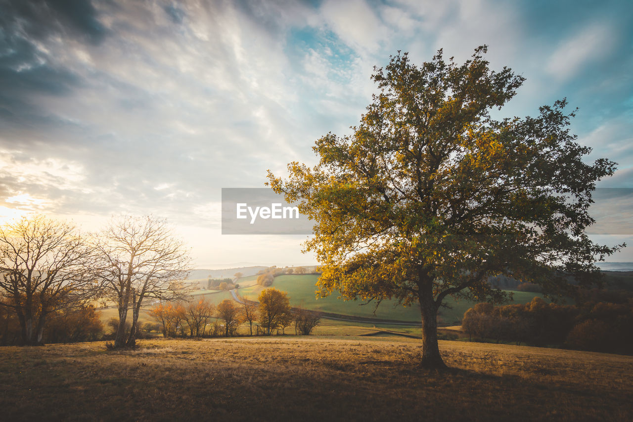 tree, sky, plant, cloud - sky, beauty in nature, tranquil scene, tranquility, scenics - nature, nature, field, land, landscape, environment, no people, growth, non-urban scene, sunlight, autumn, sunset, outdoors, change