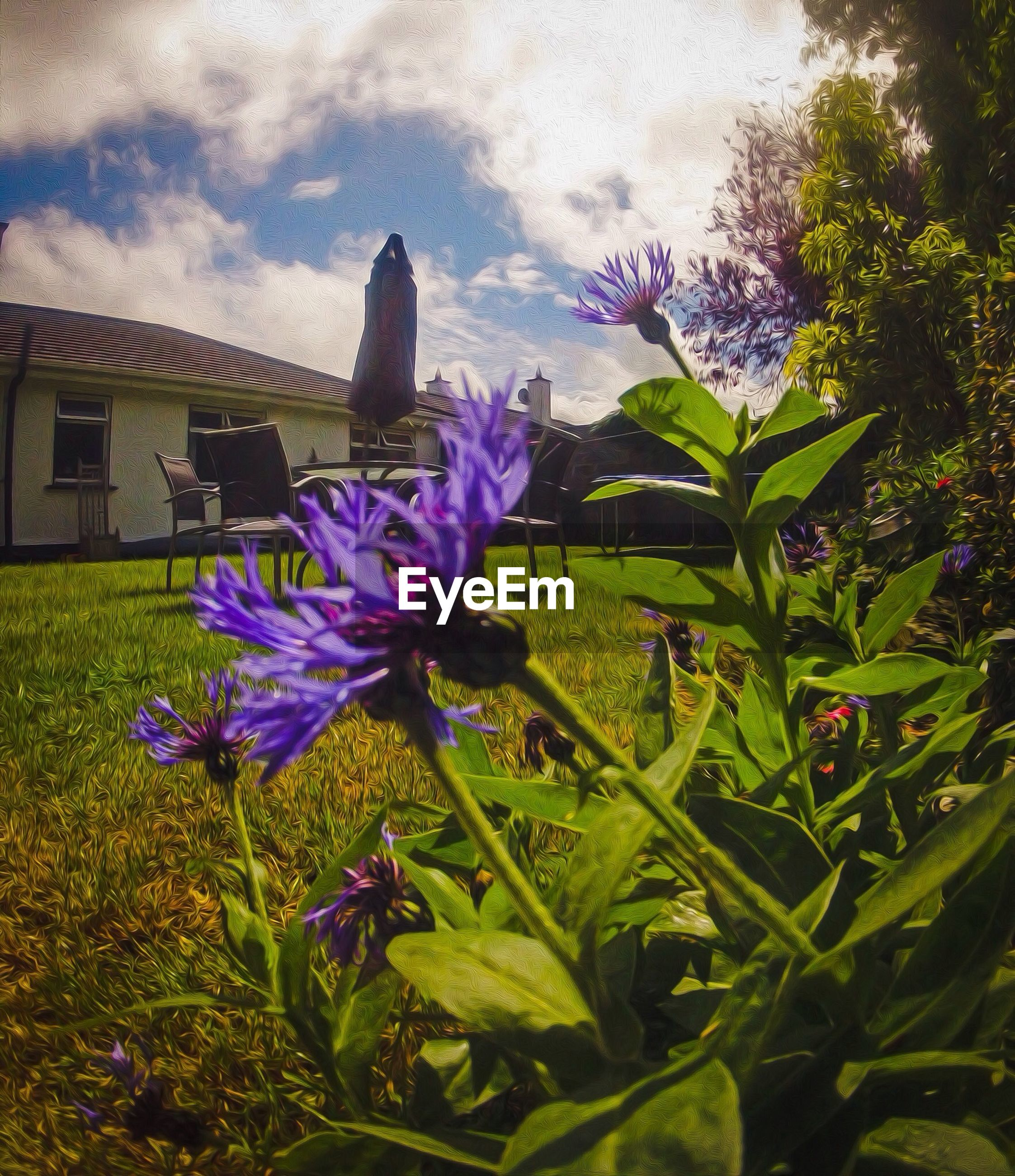 flower, freshness, purple, growth, fragility, plant, blooming, petal, beauty in nature, nature, flower head, leaf, field, sky, green color, in bloom, blue, day, stem, no people