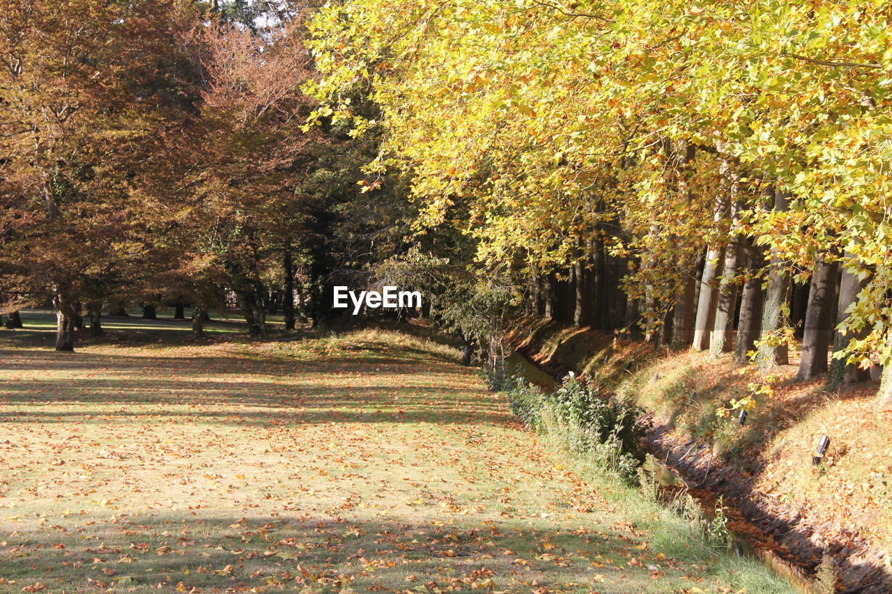VIEW OF TREES IN AUTUMN