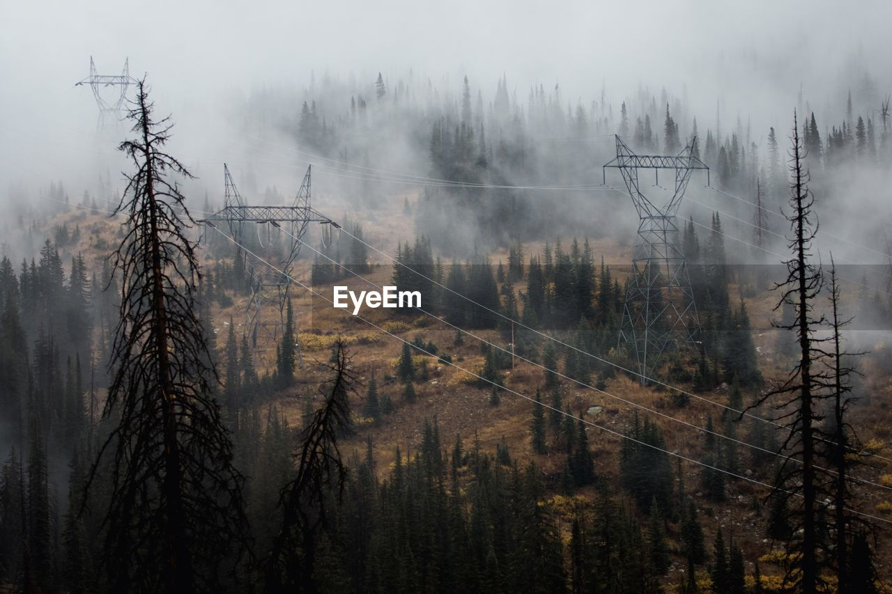View Of Electricity Pylon Over Trees In Forest During Foggy Weather