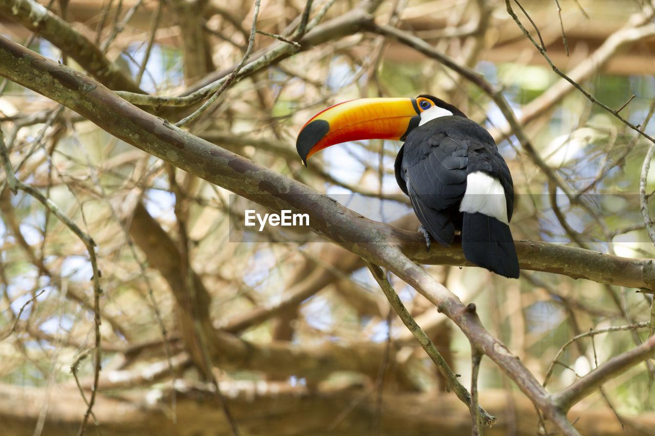 VIEW OF BIRD PERCHING ON BRANCH