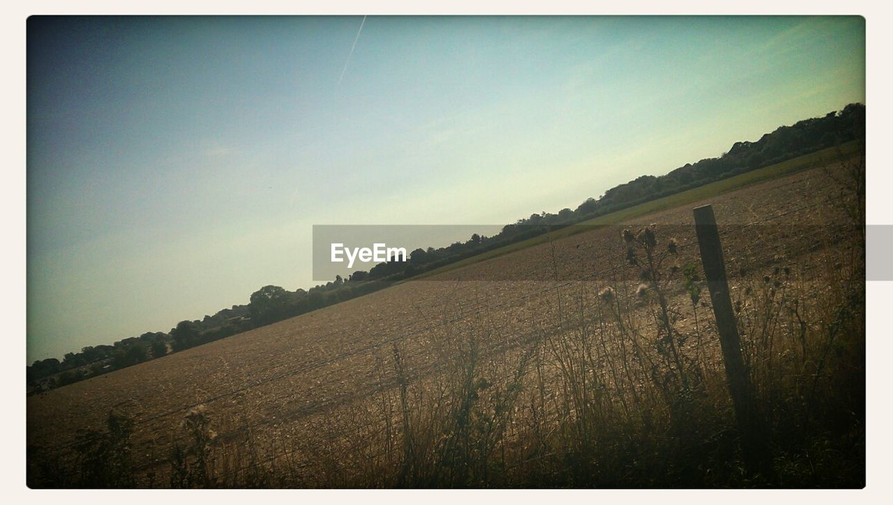 landscape, field, no people, sky, nature, outdoors, agriculture, clear sky, grass, growth, day, tree