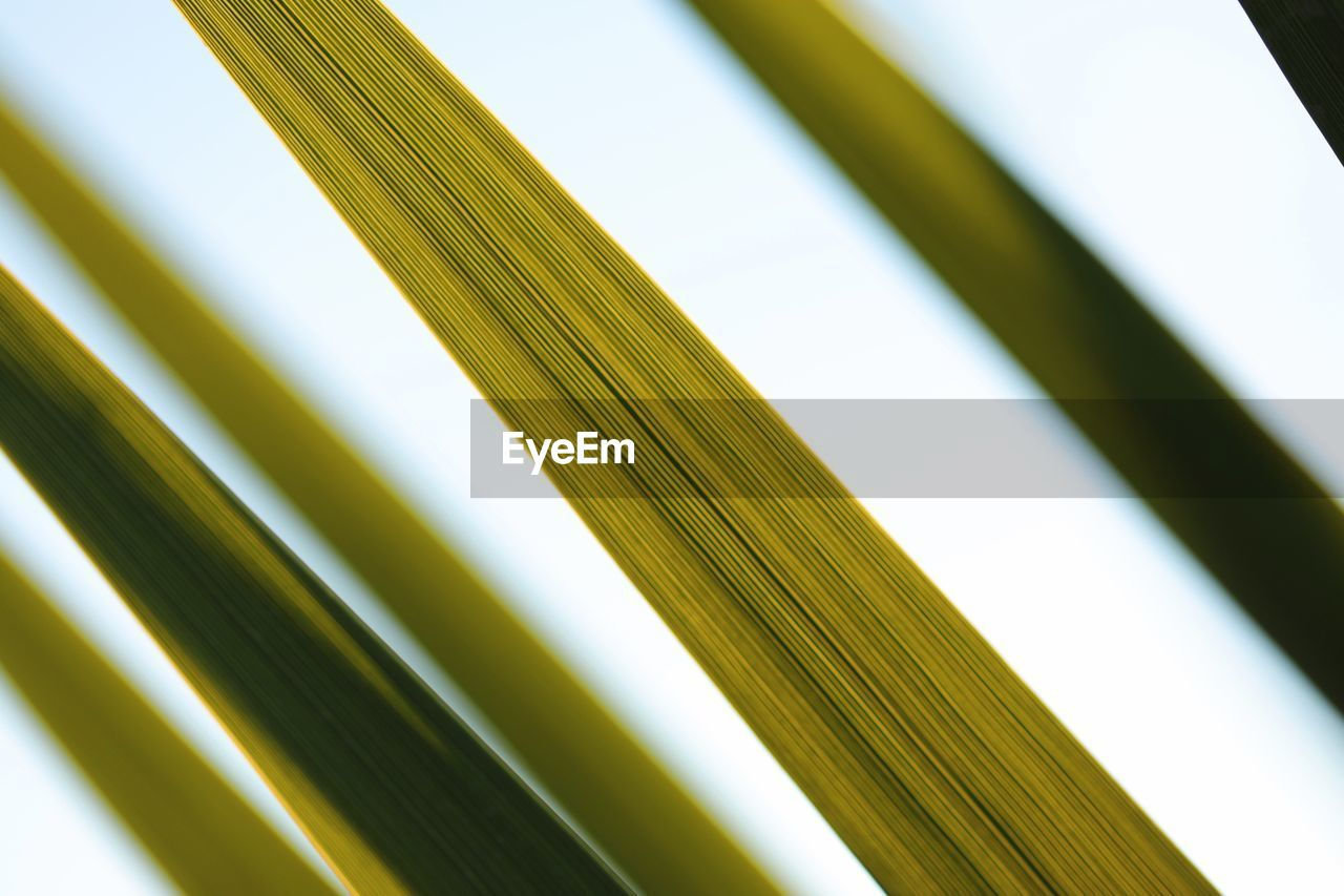 backgrounds, close-up, pattern, no people, full frame, day, indoors, nature