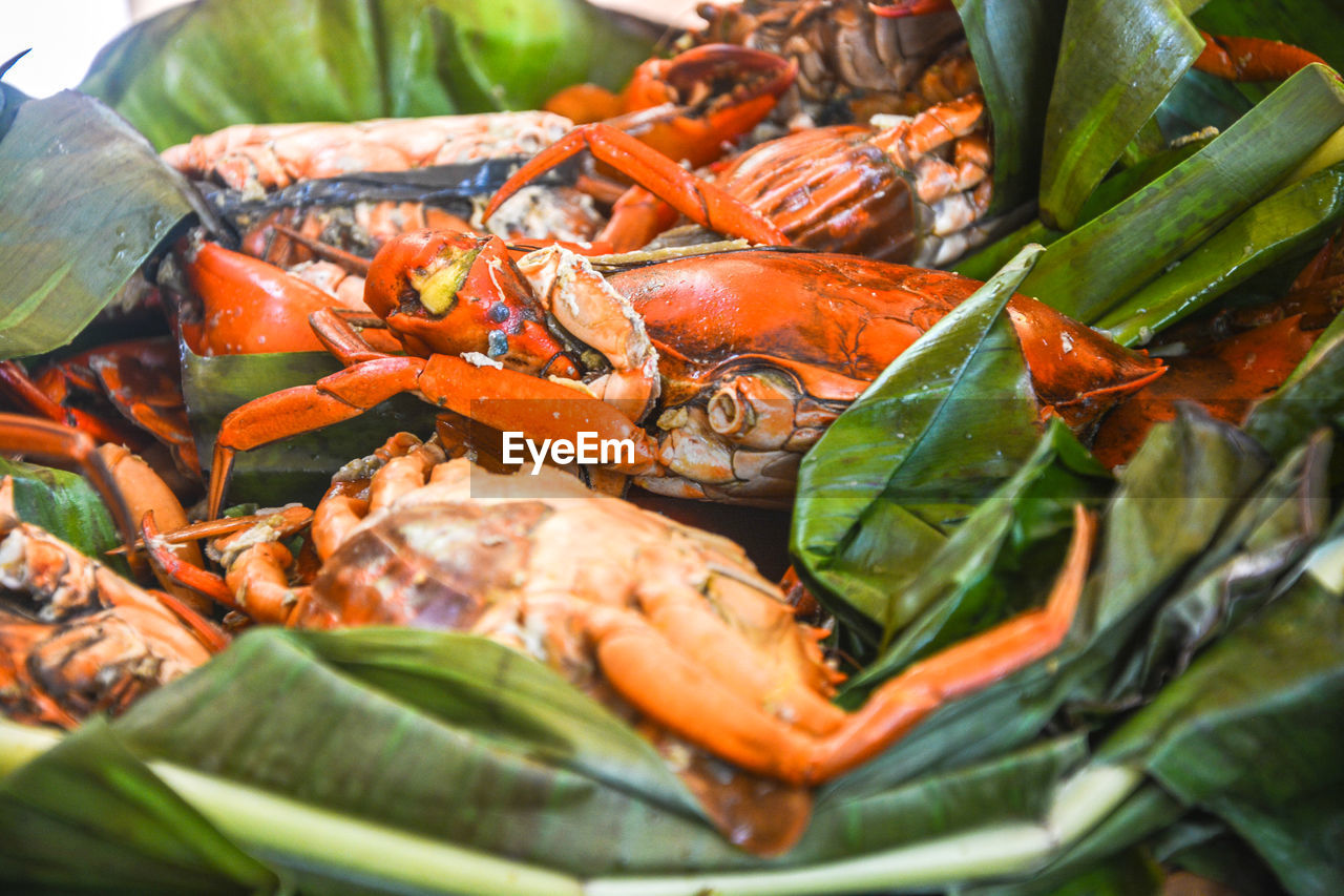 Close-up of crab in bowl